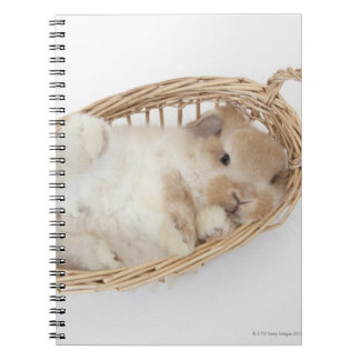 A rabbit is in a basket.Holland Lop. Notebook