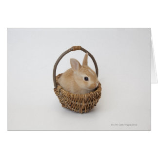 A rabbit is in a basket.Netherland Dwarf. Card