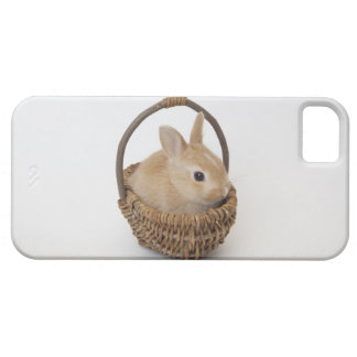 A rabbit is in a basket.Netherland Dwarf. iPhone SE/5/5s Case