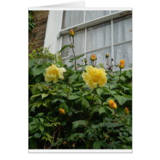 A rambler outside the window stationery note card