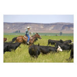 A rancher on horseback during a cattle roundup 2 photo print