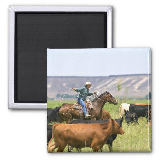 A rancher on horseback during a cattle roundup fridge magnet