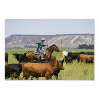A rancher on horseback during a cattle roundup poster