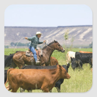 A rancher on horseback during a cattle roundup square sticker