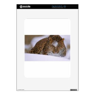 A Rare Amur Leopard Peers Over a Snowy Embankment. iPad Skins