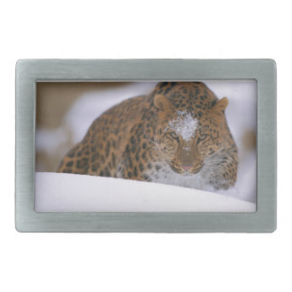 A Rare Amur Leopard Peers Over a Snowy Embankment. Rectangular Belt Buckle