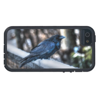 A Raven in Snow II Corvid-lovers Art Design iPhone 5/5S Cover