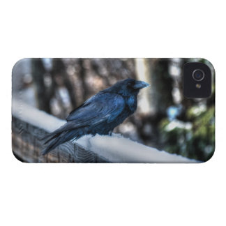 A Raven in Snow II Corvid-lovers Art Design iPhone 4 Case-Mate Cases