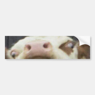 A Really Attractive Bumper Sticker with a Cow