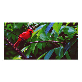 A red bird sits on a post card