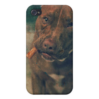 A Red Nose Pit Bull Chewing a Cigar iPhone 4 Case