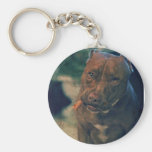 A Red Nose Pit Bull Chewing a Cigar Keychain