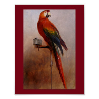 A Red Parrot by George Cole Poster