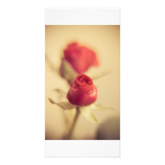 A red rose for the mother… card