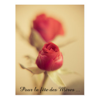 A red rose for the mother… postcard