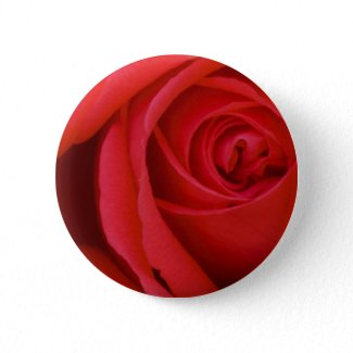 A Red Rose For You button