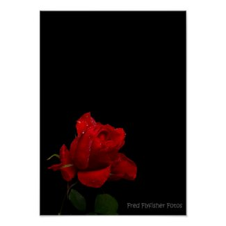 A Red Rose Print