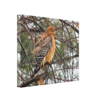 A Red-shouldered Hawk Bird on a Branch Canvas Print