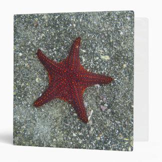 A Red Starfish | Galapagos, Equador Binder