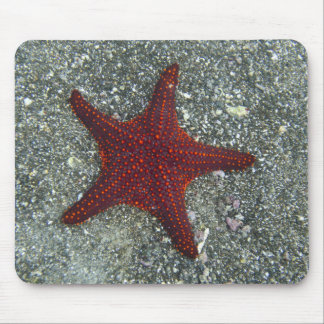 A Red Starfish | Galapagos, Equador Mouse Pad