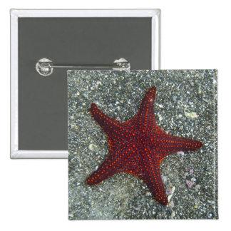 A Red Starfish | Galapagos, Equador Pinback Button