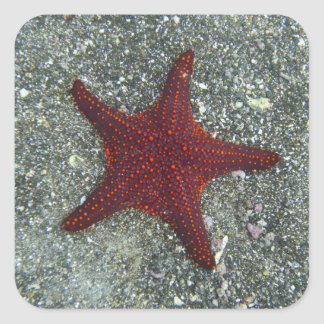 A Red Starfish | Galapagos, Equador Square Sticker