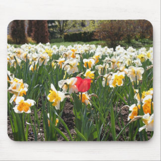 a red tulip mouse pad