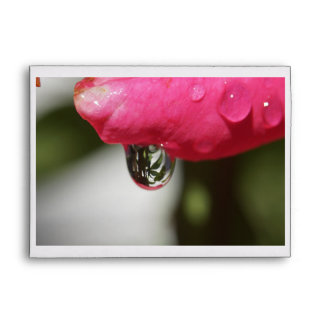 A Reflection with a Rose Envelope