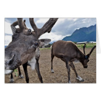 A reindeer summer card