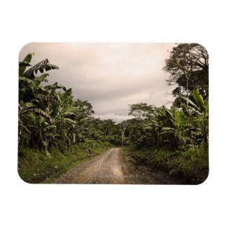 A remote jungle road rectangular photo magnet