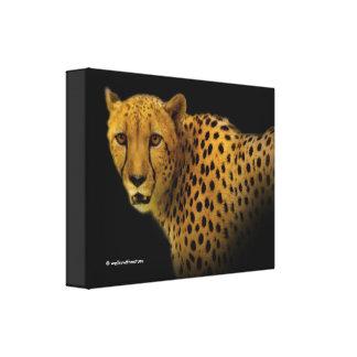A Restless Cheetah on Black Canvas Print