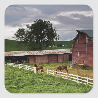 A ride through the farm country of Palouse 4 Square Sticker