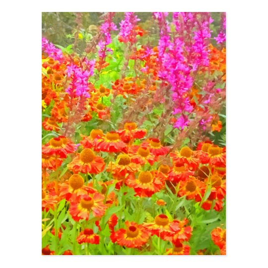 A Riot of Colour HDR Postcard