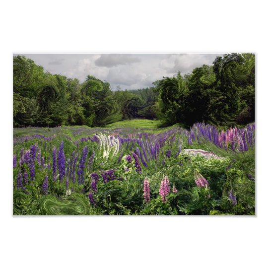 A Riot of Lupine: Fine art Print