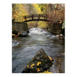 A River Running Through American Fork Canyon Postcard