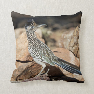 A Road runner pauses momentarily on its search Pillow