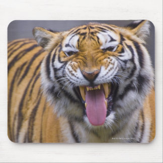 A roaring tiger, Taiwan, Taipei, Taipei Zoo Mouse Pad
