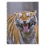 A roaring tiger, Taiwan, Taipei, Taipei Zoo Spiral Notebook