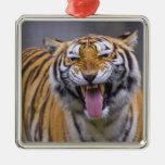 A roaring tiger, Taiwan, Taipei, Taipei Zoo Christmas Ornaments