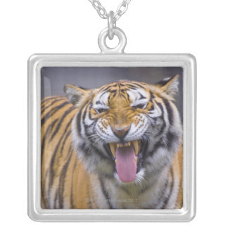 A roaring tiger, Taiwan, Taipei, Taipei Zoo Silver Plated Necklace