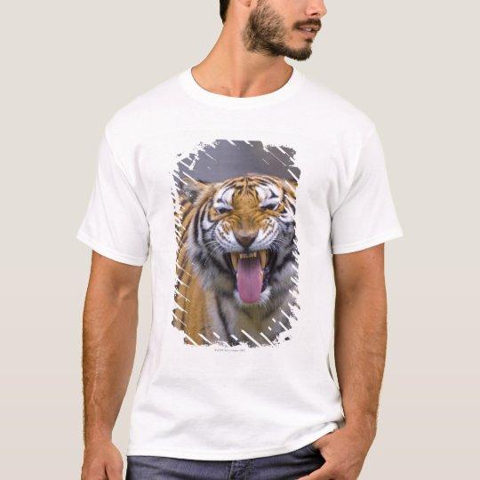 A roaring tiger, Taiwan, Taipei, Taipei Zoo T-Shirt