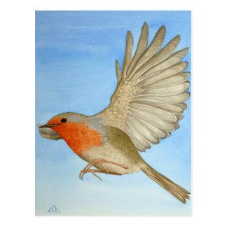 A Robin in flight Postcard