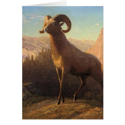 a rocky mountain sheep, Bierstadt Albert Greeting Cards