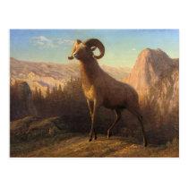 a rocky mountain sheep, Bierstadt Albert Postcard