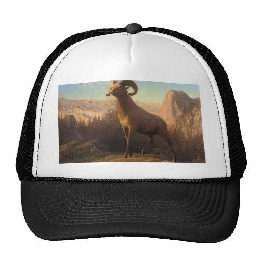 a rocky mountain sheep, Bierstadt Albert Trucker Hat
