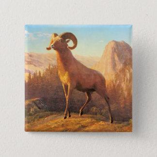 A Rocky Mountain Sheep by A. Bierstadt Button