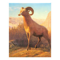 A Rocky Mountain Sheep by A. Bierstadt Flyer