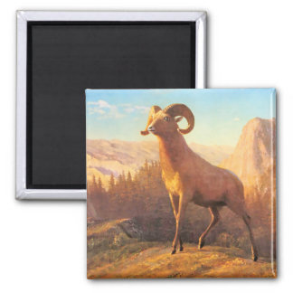 A Rocky Mountain Sheep by A. Bierstadt Magnet