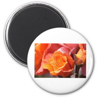 A Rose Amongst the Thorns 2 Inch Round Magnet