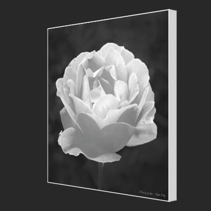 A Rose by any other..., Fine Art gallery-style Stretched Canvas Prints
